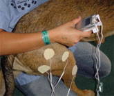 Neuromuscular Electrical Stimulation (NMES) for pets